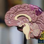 human brain - addicted brain - memory - how to get your memory back - memory stem cells